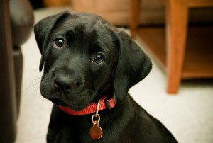 Camouflage-Dog-Harness-Collar-Leash-4